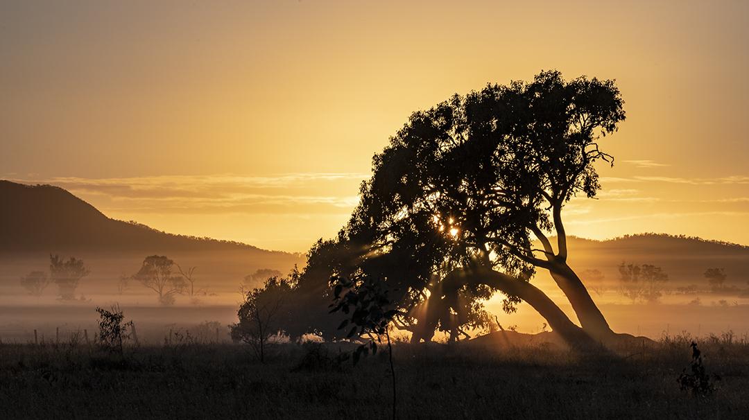Port Tree sunrise